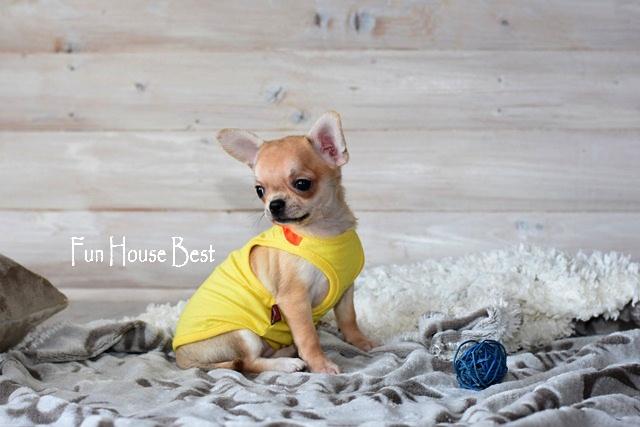 купить супер мини щенка чихуахуа
