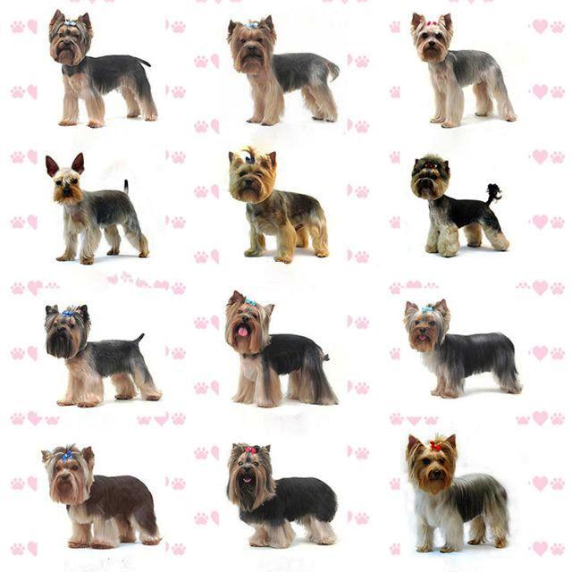 Собаки и щенки породы