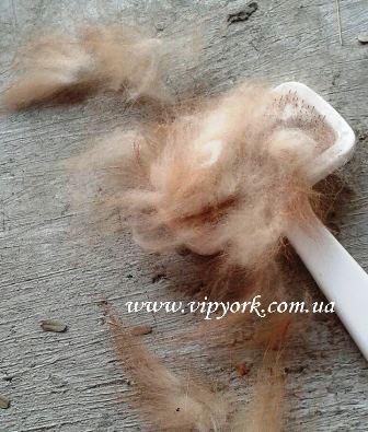 Уход за новорождёнными щенками померанского шпица